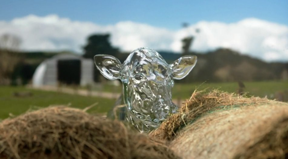 Glass Cows