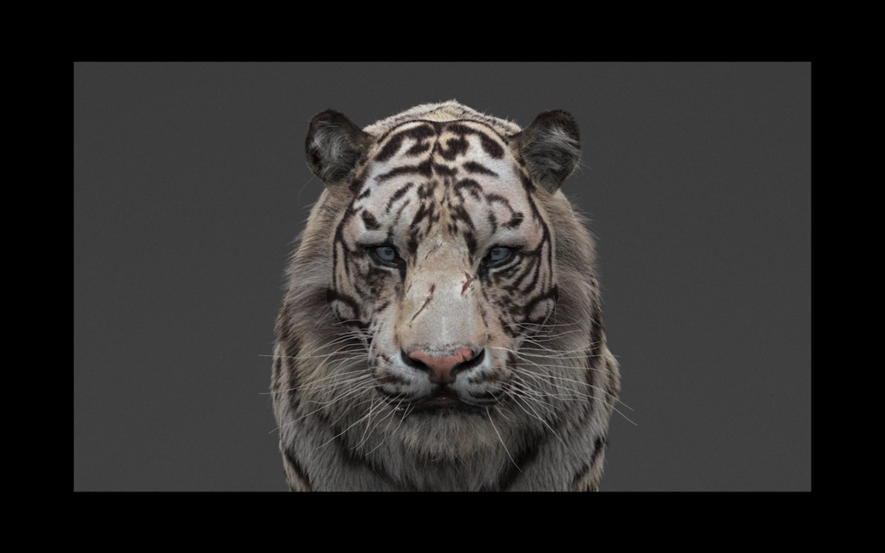 White Tiger Hair Workflow