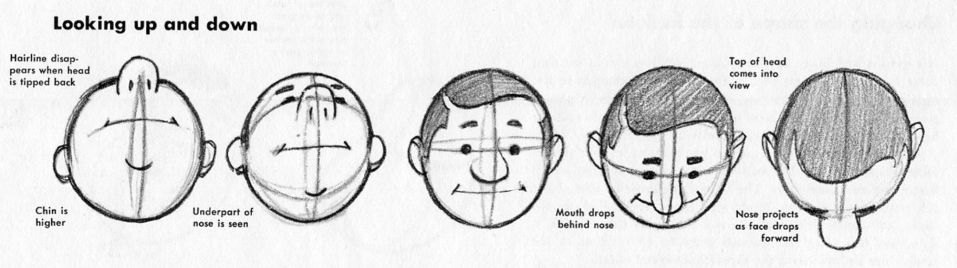 Learn To Draw Cartoons Lesson 1 The Comic Head