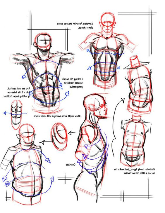 Character Male Anatomy56