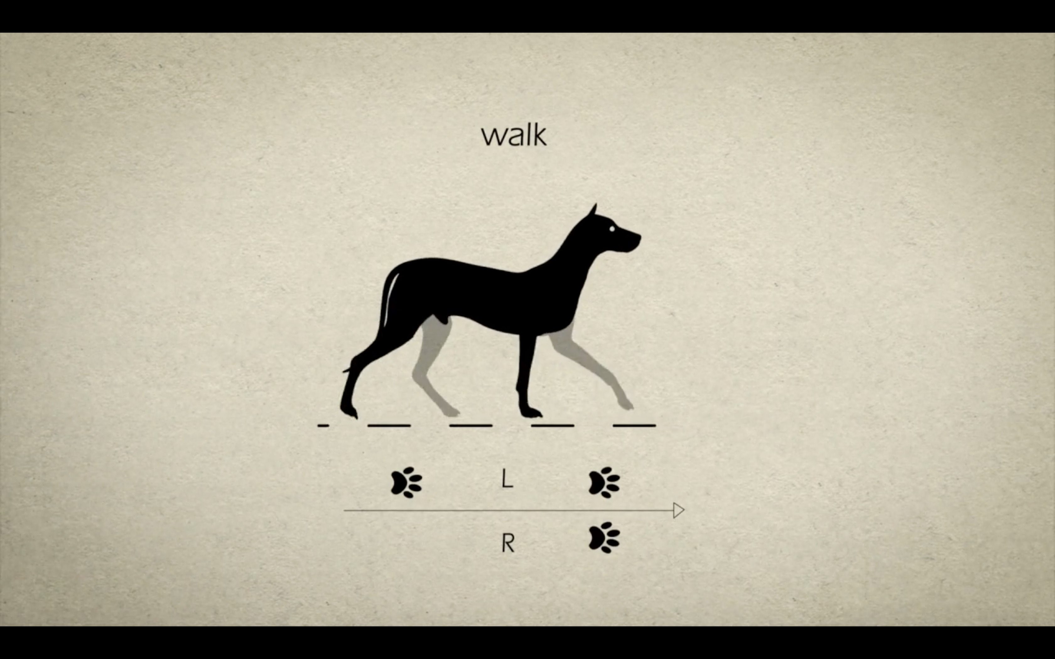 Animal Gaits for Animators