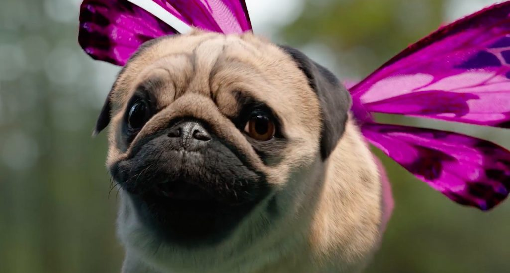 Making of Free Your Puggerfly